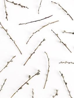 Шаблон ветвей ивы на белом фоне. плоская планировка, вид сверху