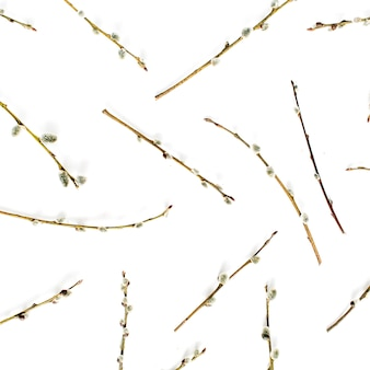 Willow branches pattern on white background. flat lay