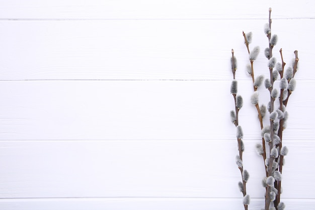 Willow catkins on a white wooden background with copy space, easter