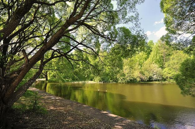 池の岸にある柳-モスクワのイズマイロフスキー公園