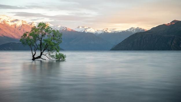 山々を背景に湖の真ん中で育つ柳の木有名なワナカの木ニュージーランド
