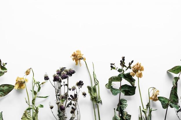 白い背景の上のしおれた花