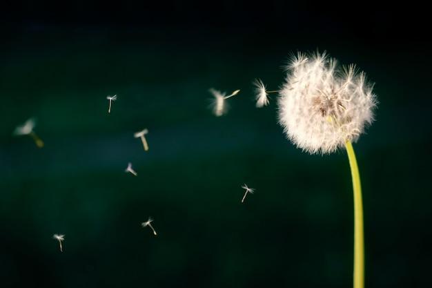 바람에 날리는 바람개비