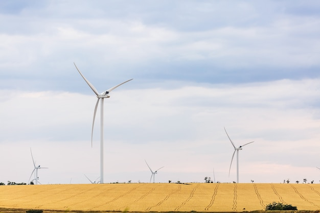 空を背景に小麦の黄色い畑の風力発電所