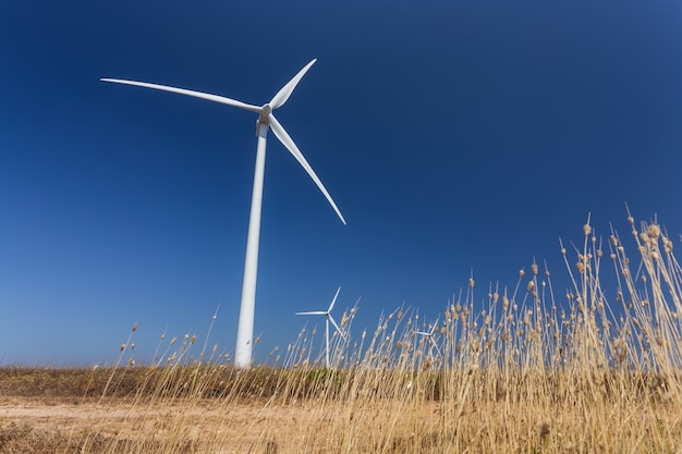 Wind generators, below, the grass in the foreground.