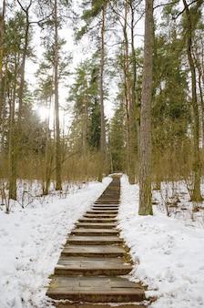 冬の森の曲がりくねった路地