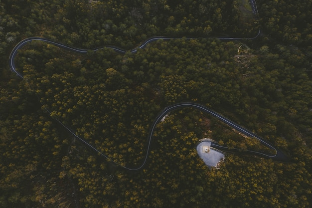 Winding highway in the center of a forest with tall trees