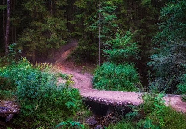 A winding path and a wooden bridge in a dark northern forest in summer