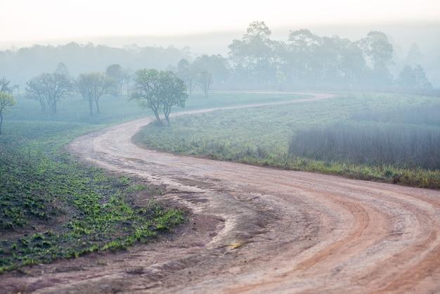 トゥンサレーンルアン国立公園の森の中の曲がりくねった道と霧の雲タイ