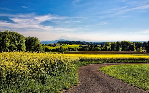黄色い花びらの花畑の横の曲がりくねった道