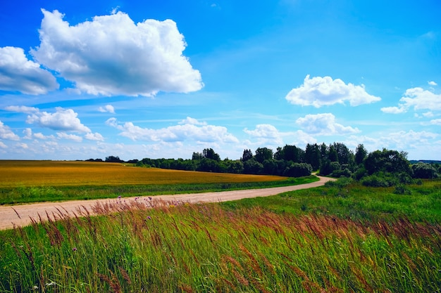 Winding road in a field on a summer day.