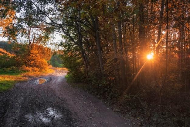 Извилистая дорога в красивом осеннем лесу на солнечном закате