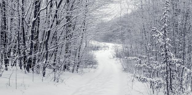冬の森の曲がりくねった道。冬の風景_