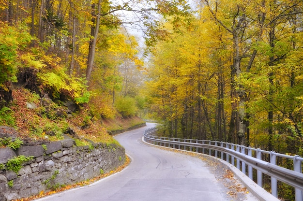 Winding road through the woods