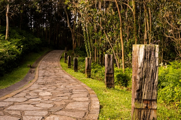 Winding stone road through sunny green forest illuminated by sunbeams.