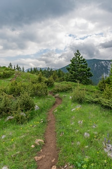 A winding trail passes through the forest among the high mountains.