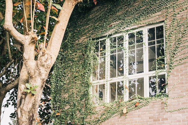 Window on the grass, ivy growing on the wall.