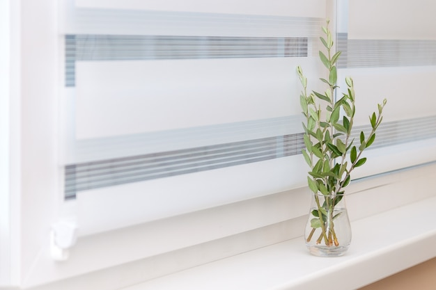 Оконная роликовая система, оливковое дерево в стеклянной вазе, уютная концепция.