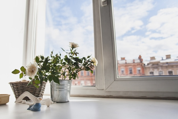 Window sill with flowers and sky view