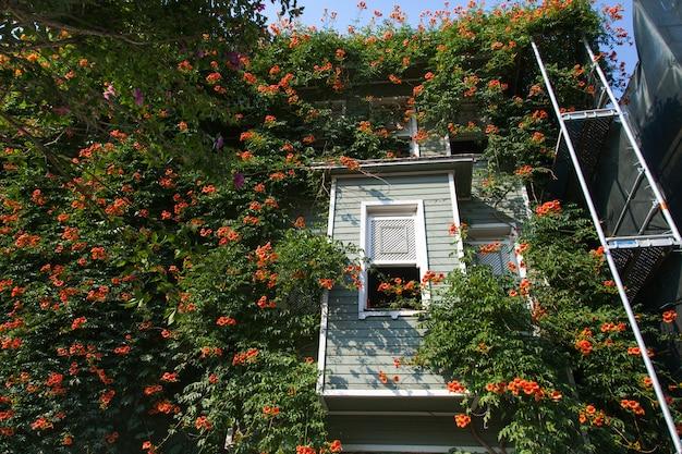 Окно с множеством зеленых листьев и красных цветов прекрасный вид снаружи из окна