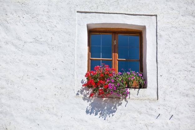 흰 벽에 화분과 화려한 꽃이 있는 창