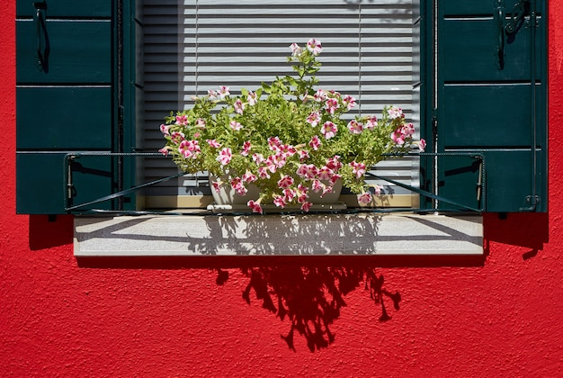 Window with green shutter and flowers in the pot. i
