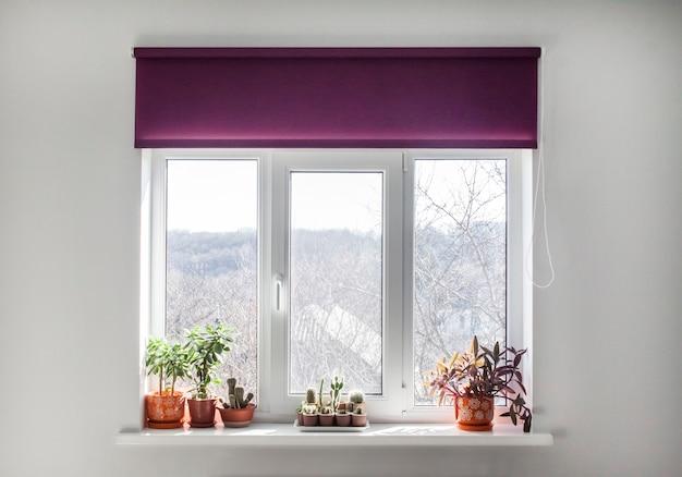 창턱에 화분에 보라색 롤러 블라인드와 집 식물이 있는 창.