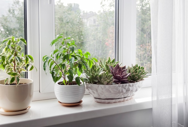 Window with white tulle and potted plants on windowsill. view of nature from the window