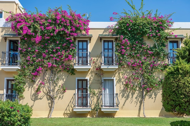 Windows with balcony on building facade with cast iron ornaments and flower tree on the wall in bodrum, turkey
