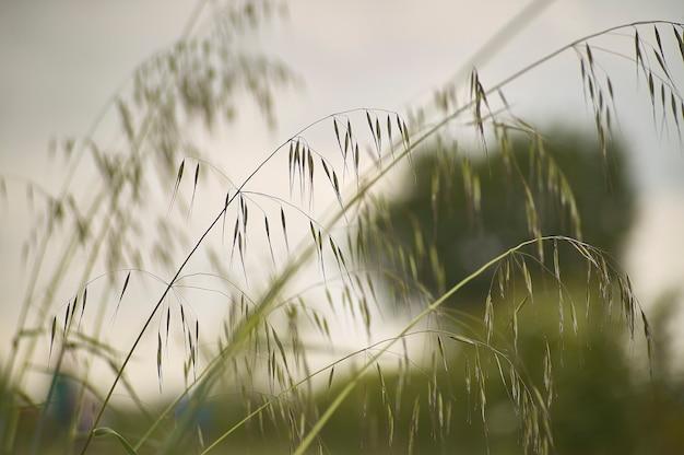 風の強い糸、憂鬱と反射を呼び起こすマクロのディテール。
