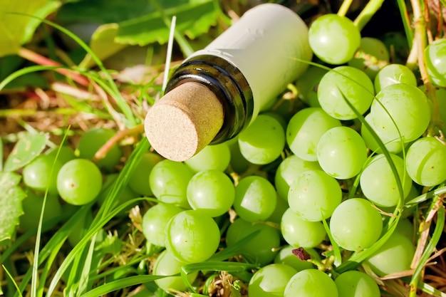 와인 병 및 포도 수확