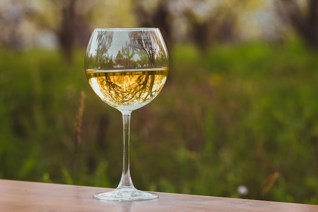 Wineglass with white wine in the blossoming apple orchard