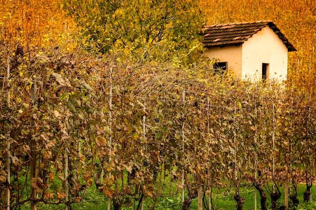 Винный пейзаж винодельческого региона бароло, ланге, пьемонт, италия