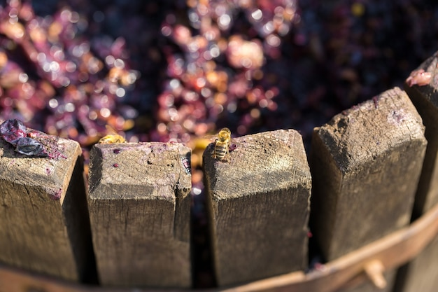 赤いマストとらせんネジを備えたワインプレス。伝統的なイタリアワインの生産、ブドウの粉砕。