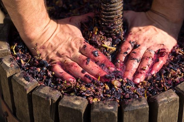 Винный пресс с красным суслом и винтовым винтом. руки винодела заделывают.