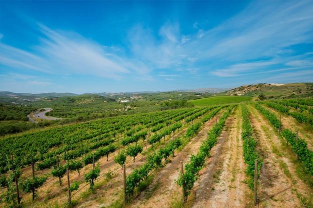 Винный двор с виноградными рядами