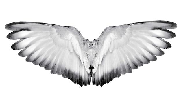 Wing feathers couple bird isolated on white background