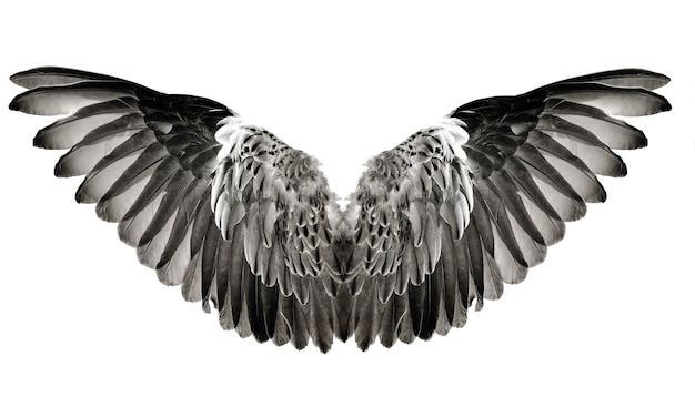 Wing feathers couple isolated on white background