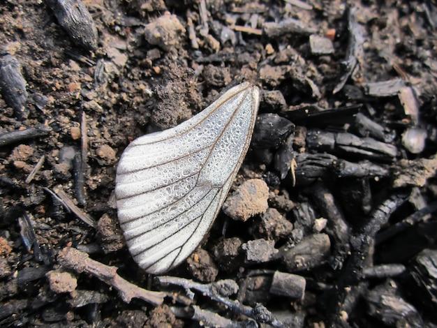 Крыло потеряно маленькой бабочкой в летнем поле
