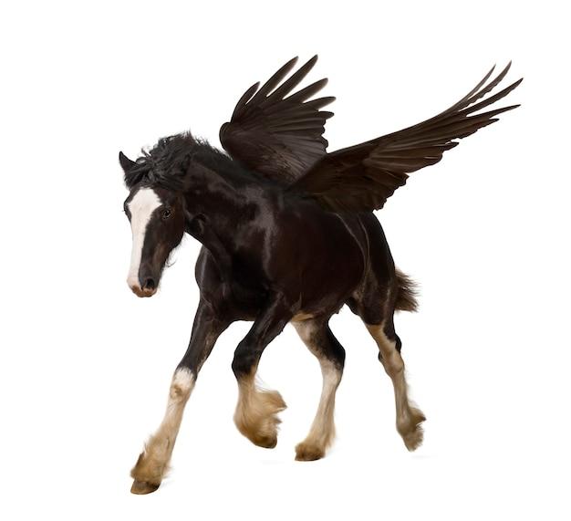 Крылатый жеребец (пегас) скачущий Premium Фотографии