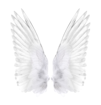 Wings of bird isolated on white.