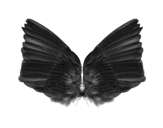 Wings isolated on white.