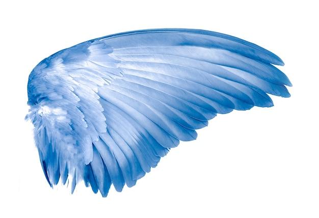 Крылья птицы на белом