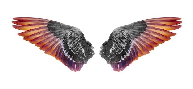 白い背景で隔離の鳥の翼