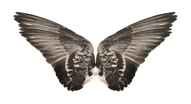 흰색 배경이에 새의 날개