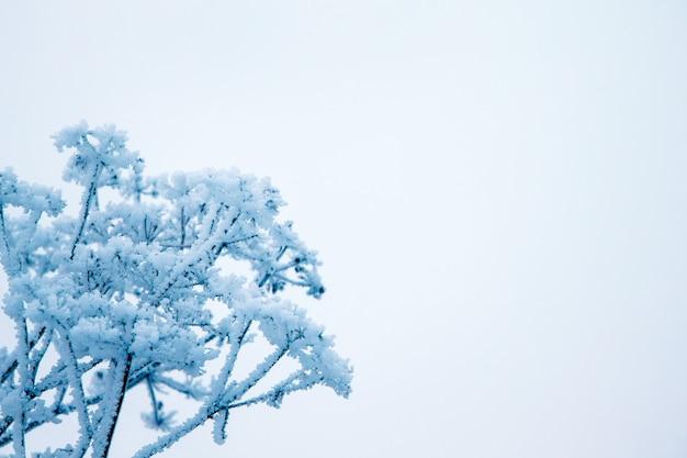 冬、霜で覆われた乾燥した植物の枝、右の自由な場所へ、持続性と耐久性のシンボル