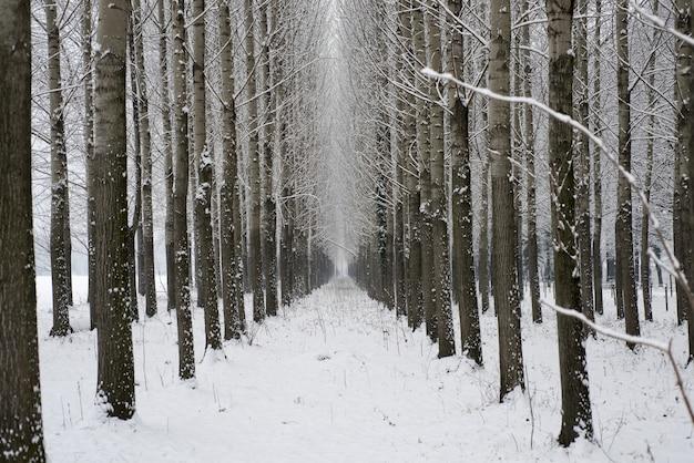 スイスの樹木と雪のある冬の路地