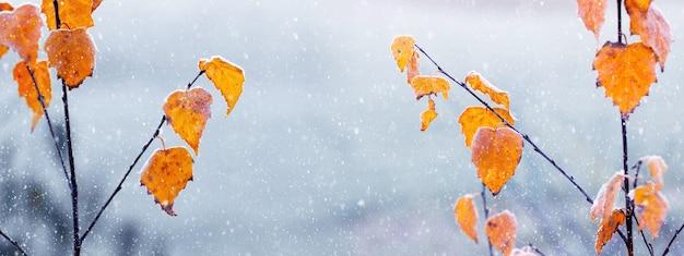 霜で覆われた白樺の葉、パノラマと冬と秋の背景
