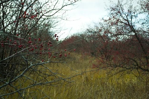 맨 가지에 겨울 사과 그 시간
