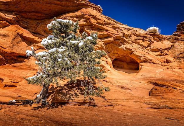 Winter in the arches national park, utah. conifer tree with snow and an arch in the background